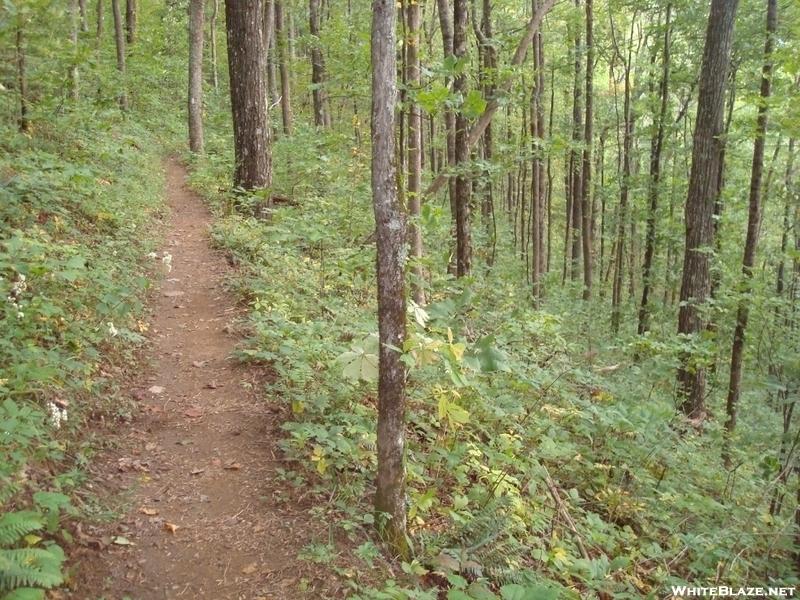 The Appalachian Trail between Gooch and Woody Gap