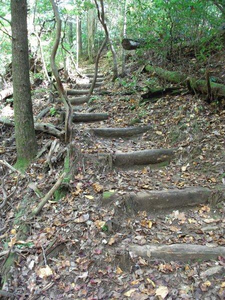 Steps leading up the Dockery Lake Trail