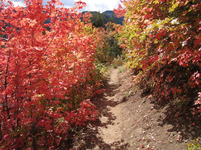 Wonderful foliage along the Wind Caves Trail