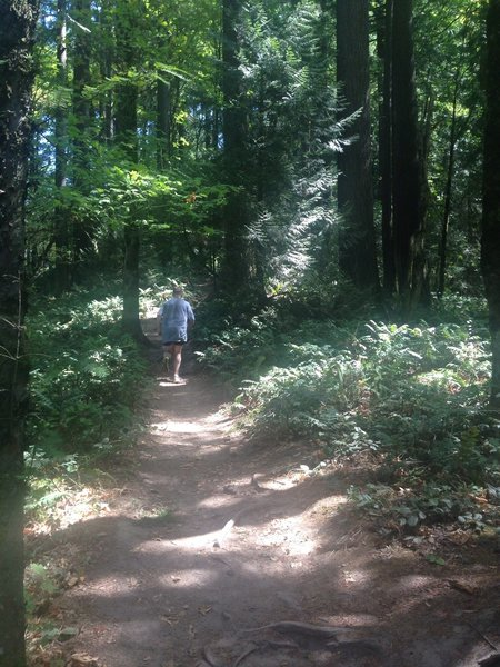 A runner makes his way up the Keil Trail. Bill Cunningham Photo