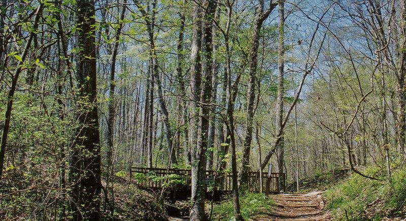 Bridge in Elachee Nature Center
