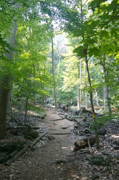 Trail views from Cunningham Falls State Park