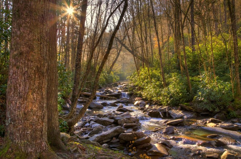 Stream in the Smoky Mtns.