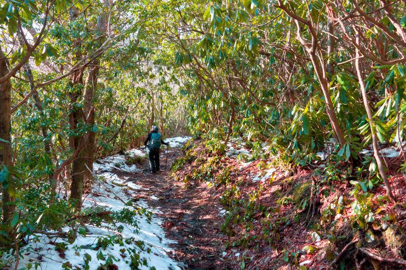 Great Smoky Mountains Bull Head Trail.