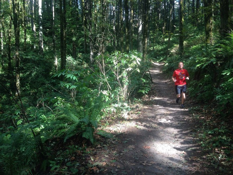 A runner passes near the 11.5 mile marker on the Wildwood Trail, just below Fire Lane 1. The trail is popular for both hiking and running as it runs the length of  elevation and Forest Park and offers a wide variety of nature. Bill Cunningham Photo