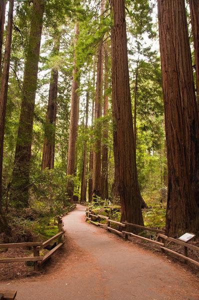 Muir Woods Main Trail