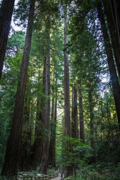 Muir Woods, Marin County, CA