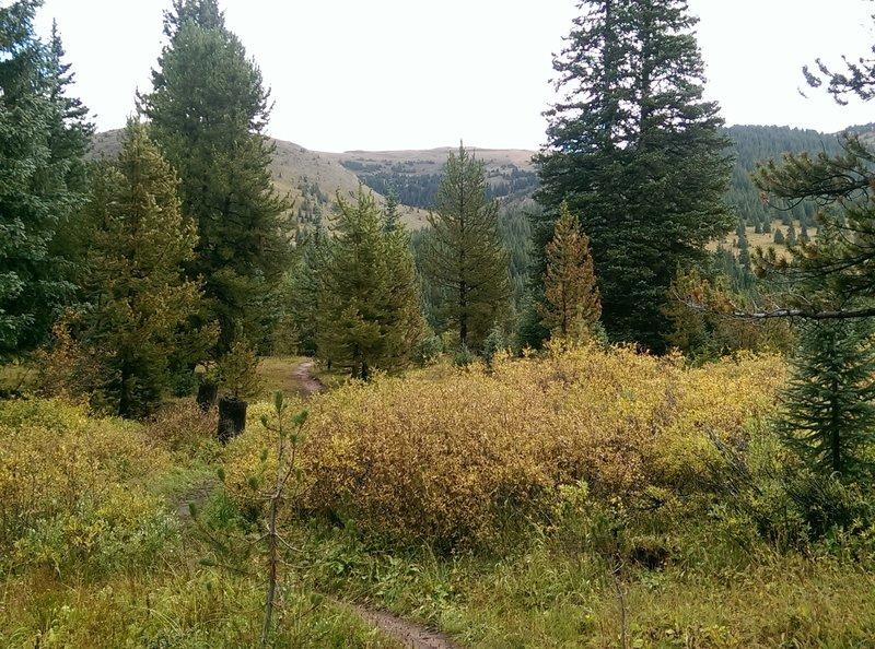 Looks like good bear habitat!