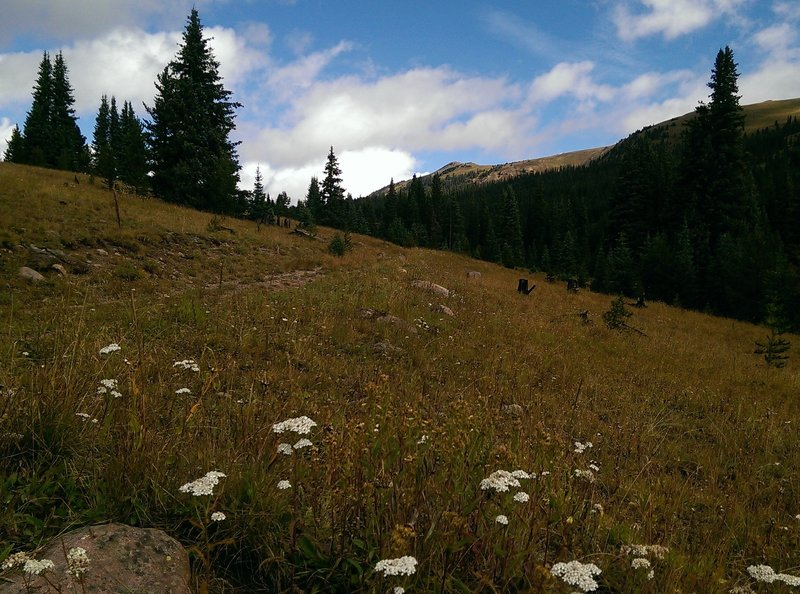 Late season wildflowers dot the meadows here