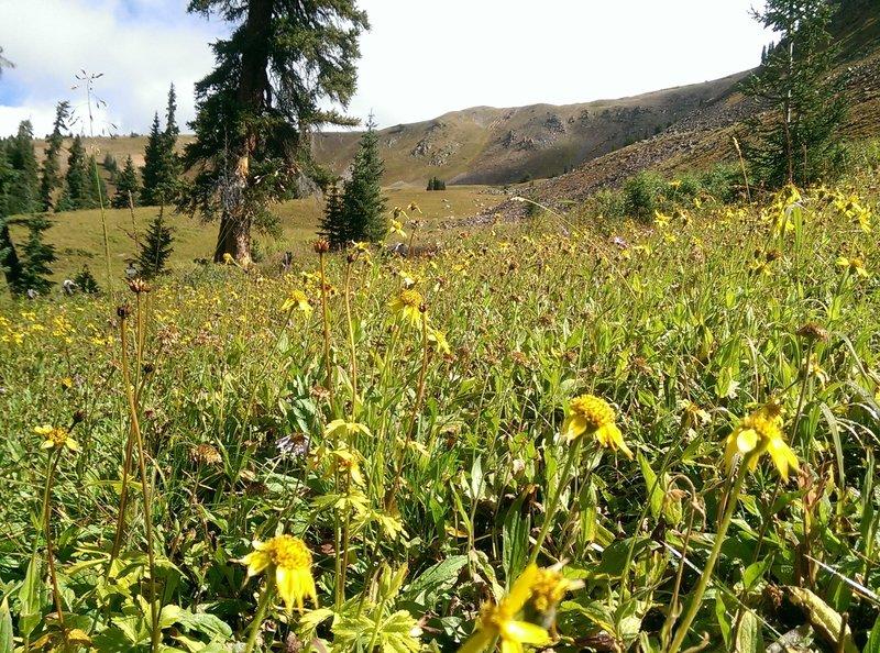 Uneva Peak looms above