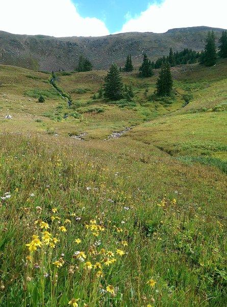 Streams criss-cross the fields below Uneva Peak