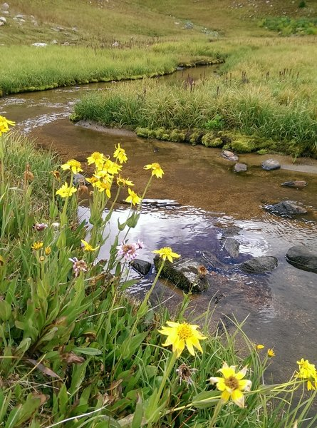 Surprisingly full stream in the bowl below Uneva Peak