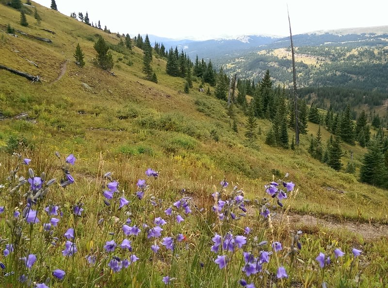 Views to the south from the Logger's Trail