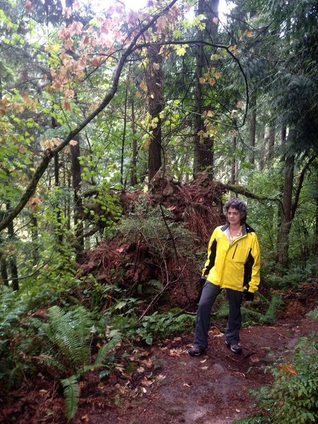 A woman stops to check out the beauty of the Linnton Trail. Behind her is the root system of a fallen Douglas fir.
