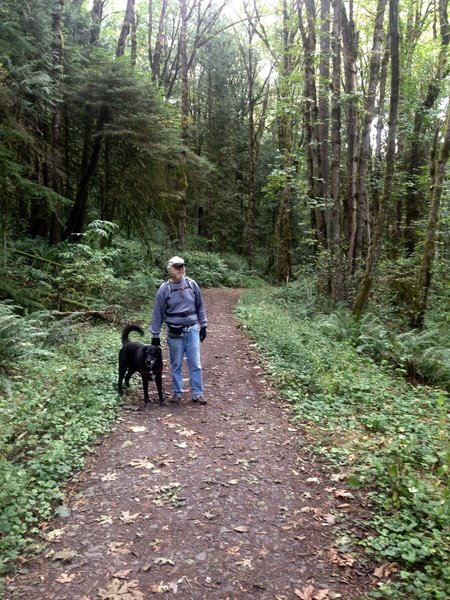 A man walks his dog near the Newton Road parking lot. This section of trail is lined mostly with big leaf maple and Western red cedar.