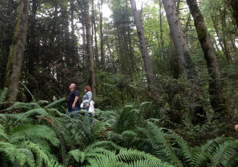 Two people start a hike along the Wildwood near Germantown Road where the trail is lined with large Douglas fir and other conifers.