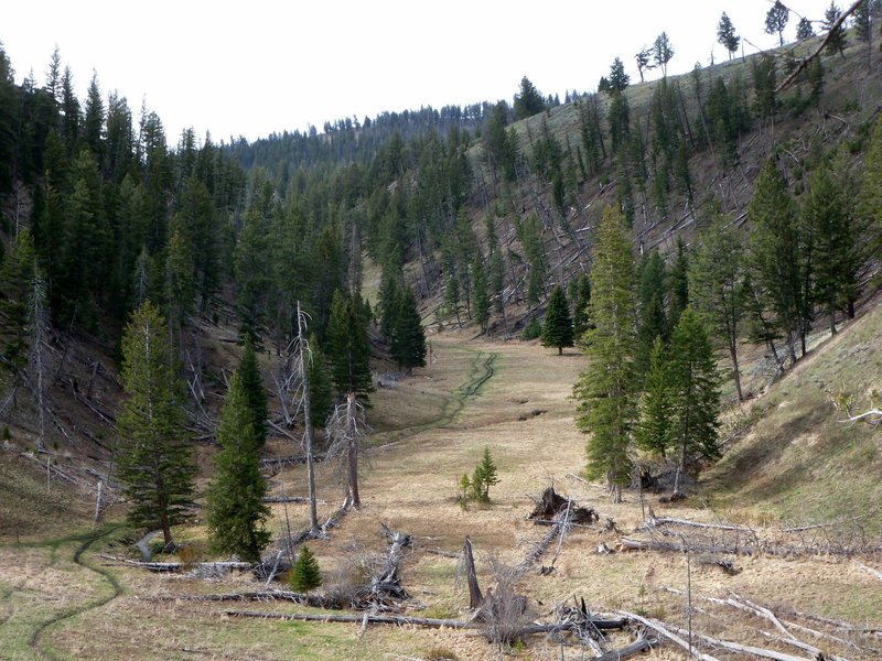 Trail near Petrified Tree