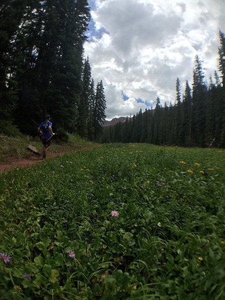 Still descending off Frigid Air Pass.  Wildflowers late in the season.