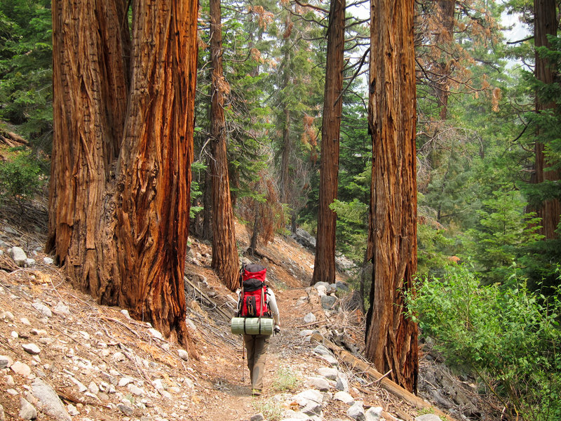 Hiker and forest in Kern Canyon on High Sierra Trail.