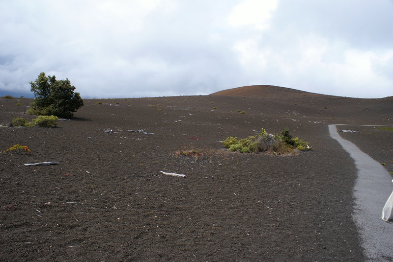 Devastation Trail--Volcanoes National Park