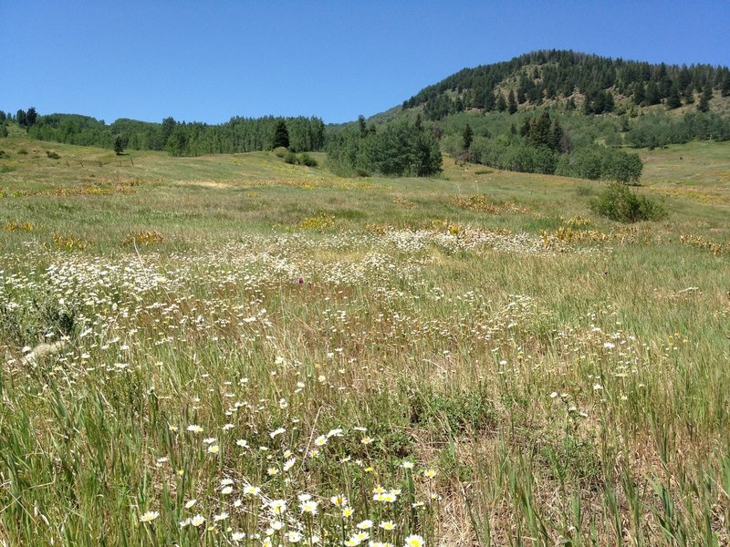 Meadow Mountain: aptly named!