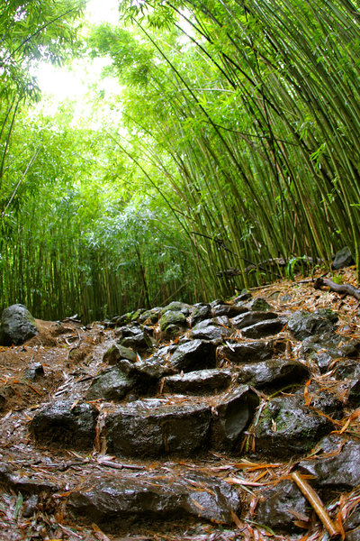 Rocks and bamboos on the Pipiwai Trail