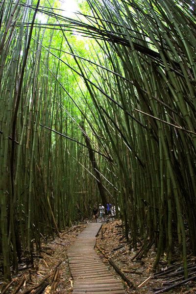 Through the bamboo trail.