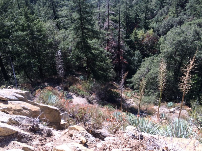 Most challenge part of the Mt Wilson trail.  Be sure to use your hands as well.