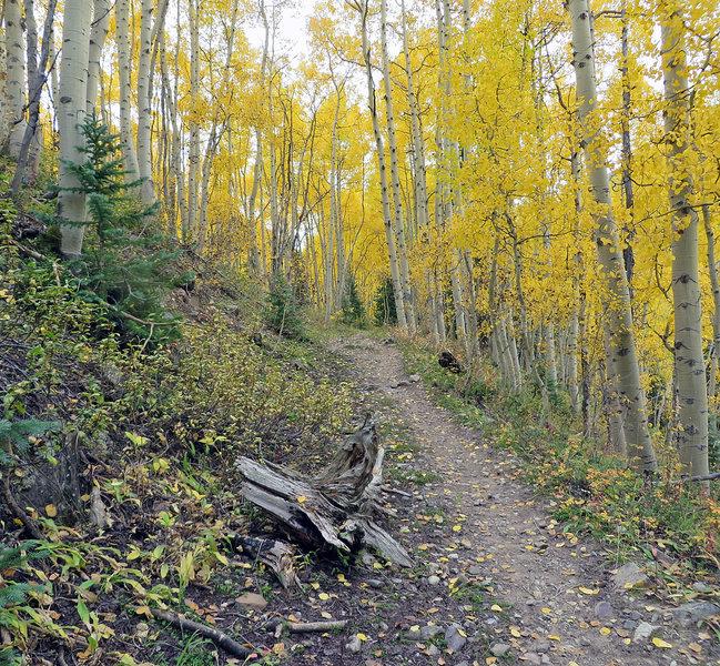 The trail beckons you onward.