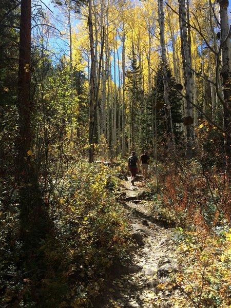 Aspens near the start of Difficult Creek Trail