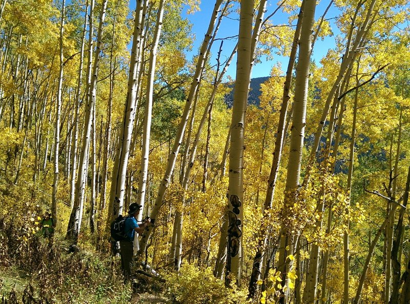 Good opportunities to revel in the aspen's colors here