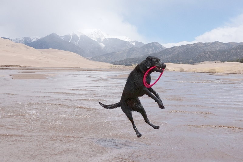 Super Maya jumping for joy at the Sand Dunes