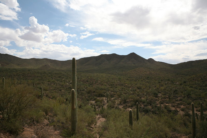 Saguaro National Park West