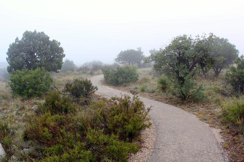 Pinery Trail tracks.