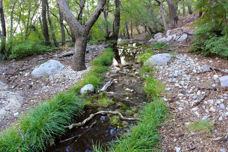 Smith Spring Creek
