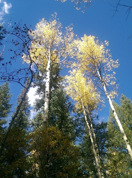 Brilliant fall colors against the blue Colorado sky