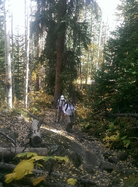 Hikers enjoying the Cross Creek Trail in early fall