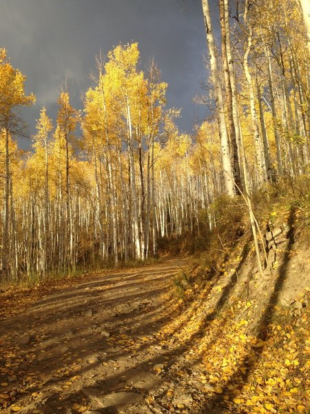 Aspens at around 1.5 miles up Davos Hill Climb trail if starting at North Trail parking lot, early October.