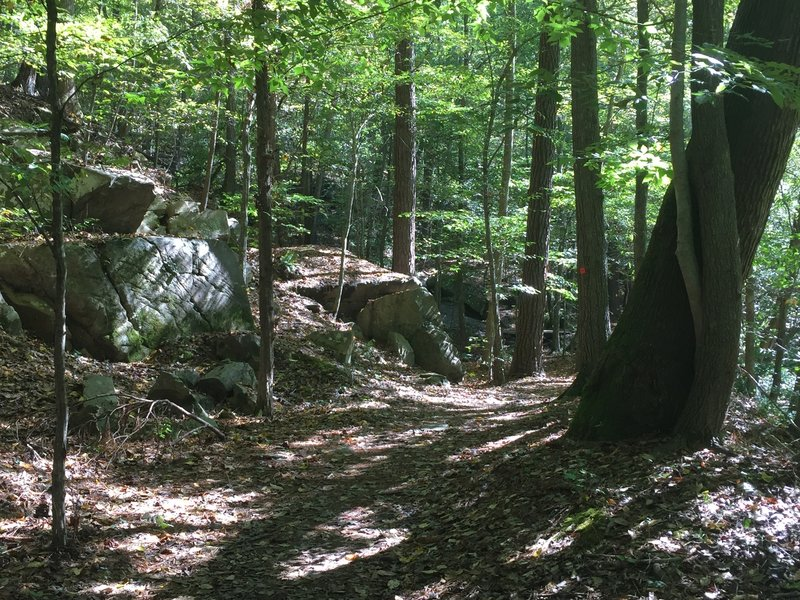 Cool exposed boulders on the north side of Crabtree Creek