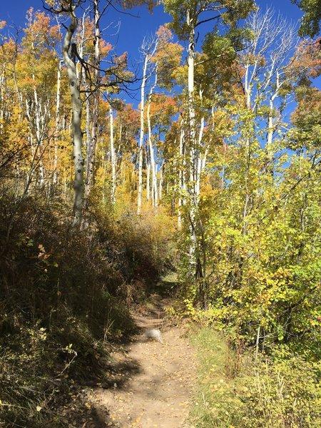 Hike through the aspens.