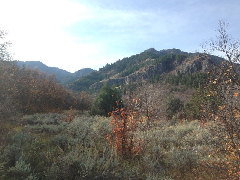A view of Mill Hollow from the Bridger Overlook.