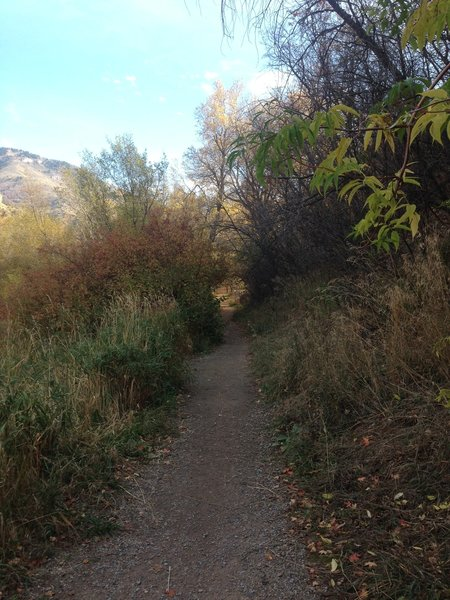 The trail heading toward Spring Hollow from Third Dam.