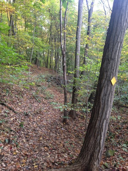 Winding trail designated by yellow tree markers.