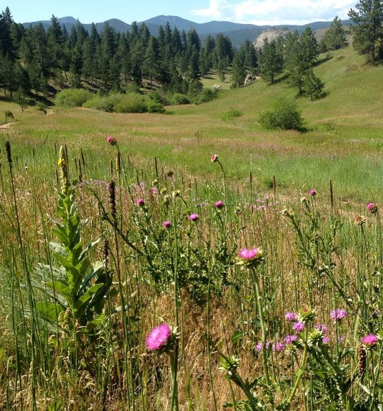The original Meyers Homestead was in this meadow.