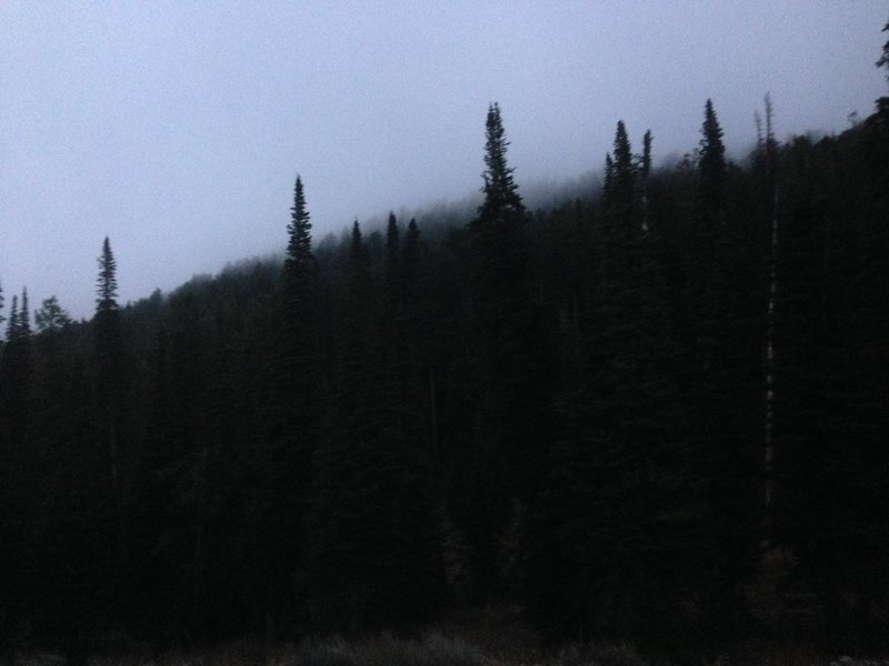Low clouds hanging over the trees near the top of the Spring Hollow Trail.