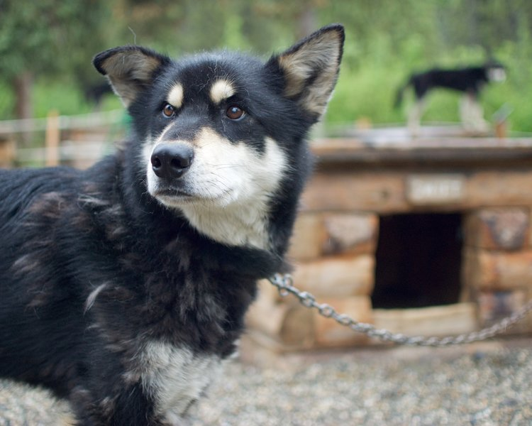 A younger dog at the Kennels.