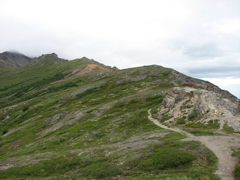 Denali: Mt Healy.