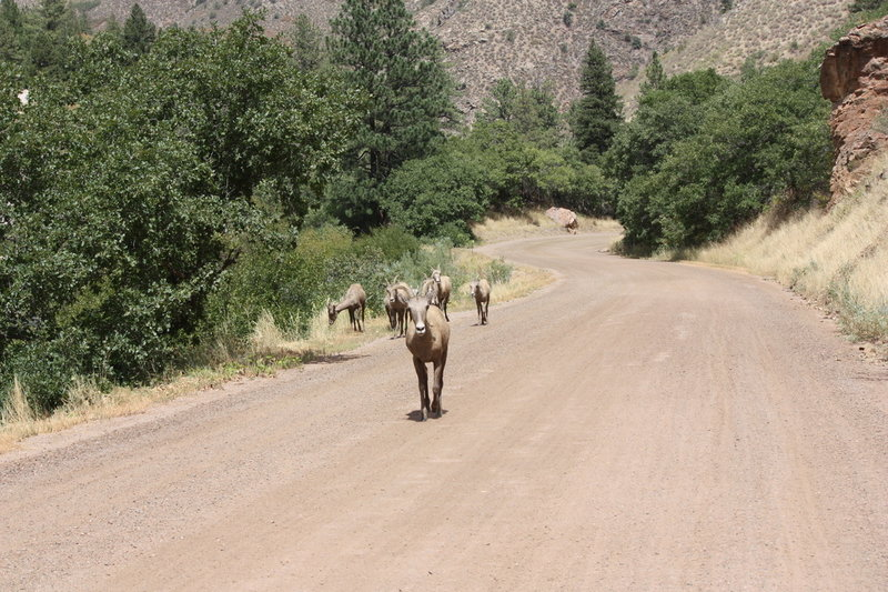 Sometimes, big horn sheep can be seen on the trail.