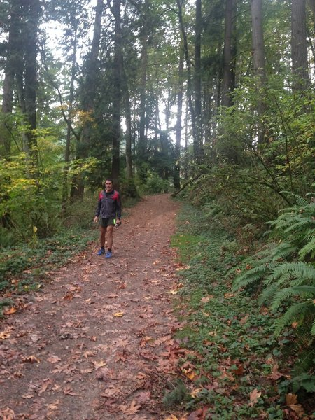 A runner nears the junction of the Wildwood Trail near the bottom of Holman Lane.
