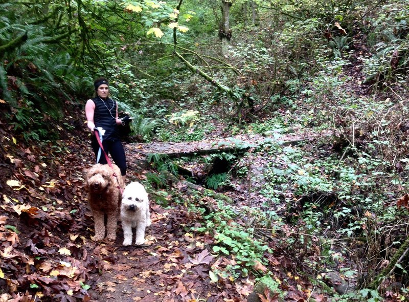 A woman walks her dogs along the beautiful Alder Trail.